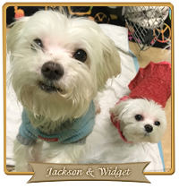 jackson-and-widget