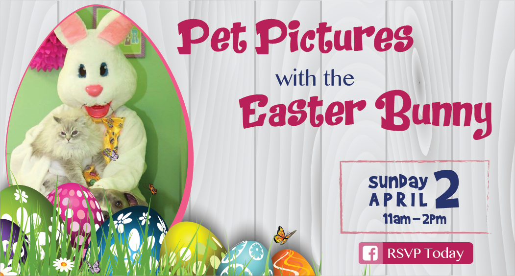 Pet Pictures with the Easter Bunny @ Pet Spas & Suites | Albany | New York | United States