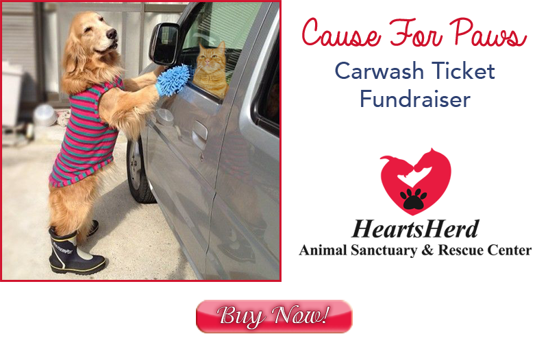 cause-for-paws-banner-xmas-btn