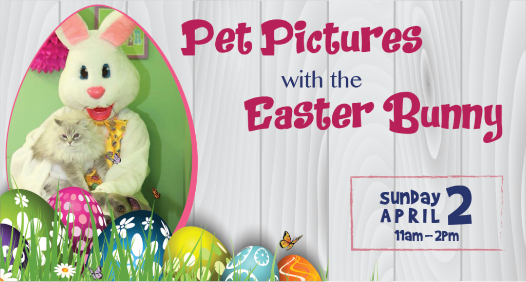 pet-pictures-with-the-easter-bunny