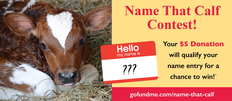 Name That Calf! @ HeartsHerd Animal Sanctuary & Rescue Center | New York | United States